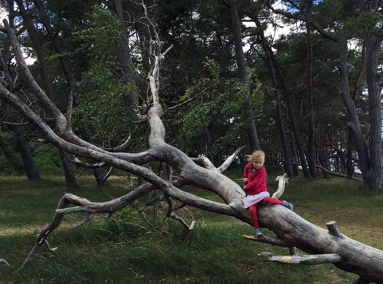 Wald Kind 2