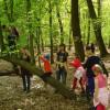 15_Waldschule2