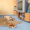 3_Hund_WAB